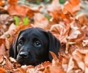 dog, cute, and autumn image
