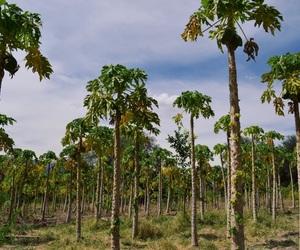 Bolivia, missiontrip, and papaya image