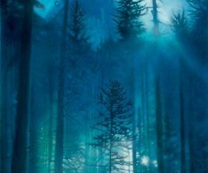 animals, blue, and forest image