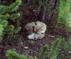 fox, forest, and animal image