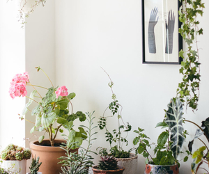 appartment, cosy, and plants image