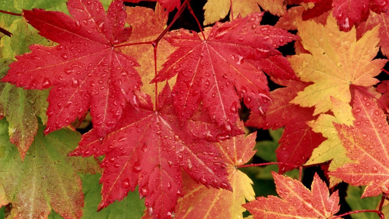 leaves, autumn, and colorful image
