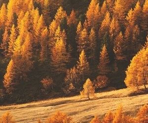 autumn, forest, and tree image