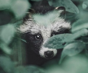 animals, art, and green image
