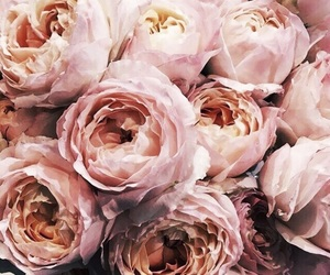 aesthetic, antique rose, and flowers image
