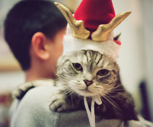 boy, cat, and christmas image
