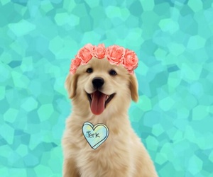 flowers and dogie image