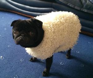dog, funny, and sheep image
