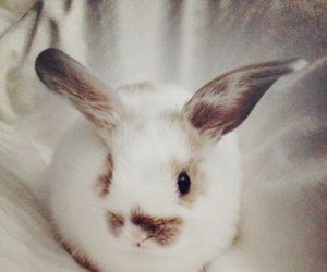 animals, fluffy, and bunnies image