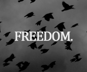 birds, black and white, and freedom image