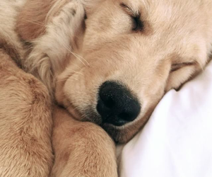 cute puppy, iphone wallpaper, and puppy image