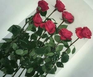 grunge and rose image
