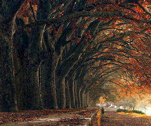 autumn, leaves, and fall foliage image