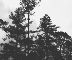 black, forest, and space image