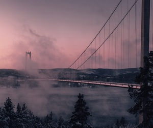 bridge, fog, and tree image