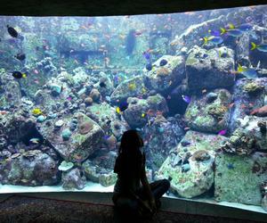 fish, girl, and aquarium image