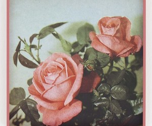 rose, flowers, and indie image