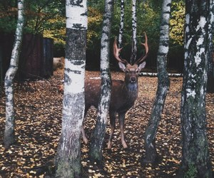 deer, fall, and park image