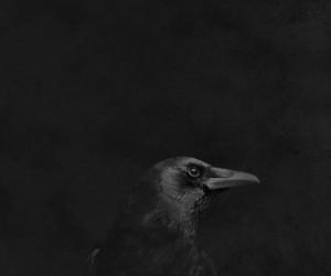 bird, Darkness, and sadness image