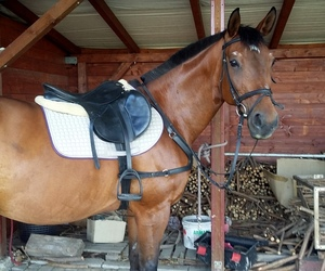 equestrian, passion, and konie image