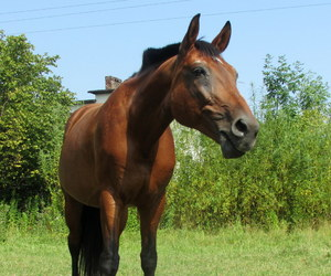 equestrian, horses, and muscle image