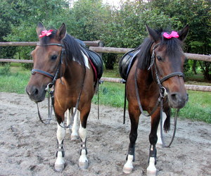 equestrian, fun, and horses image