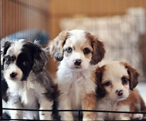 dogs, cute, and little image