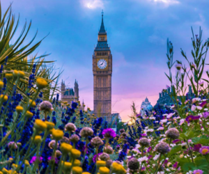 brittish, colors, and evening image