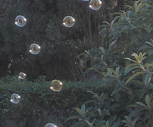 bubbles, aesthetic, and nature image