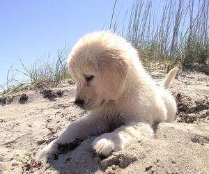 animals, beach, and puppy image