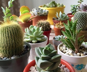 succulent, cactus, and plants image