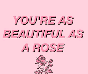 quotes, rose, and pink image