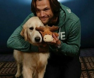 jared padalecki, supernatural, and moose image