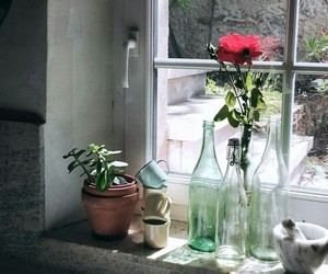 flowers, gray, and window image