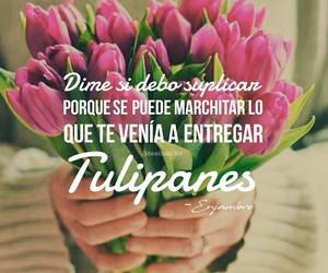Lyrics, proaño, and tulipanes image