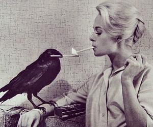 cigarette, black and white, and bird image
