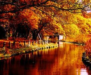 autumn, river, and fall image