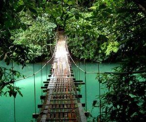bridge, nature, and tropical image