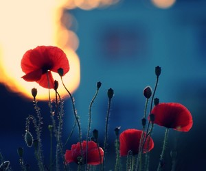 beautiful, flowers, and life image