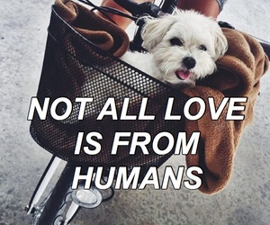 aesthetic, animals, and cute animals image