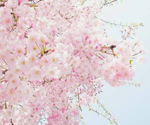 spring, flowers, and pink image