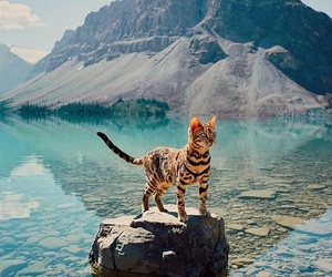 cat, animal, and mountains image