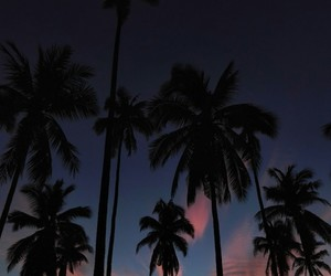 clouds, palm trees, and summer image