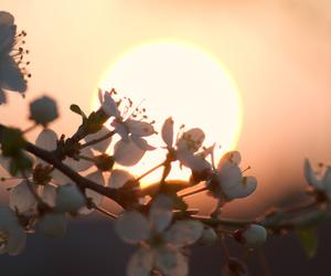 flowers, sun, and japan image