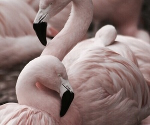 theme, themes, and flamingos image