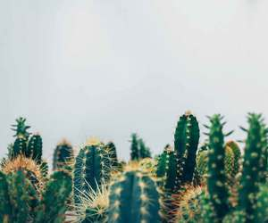 cactus, flowers, and hipster image