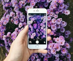 beautiful, iphone, and flowers image