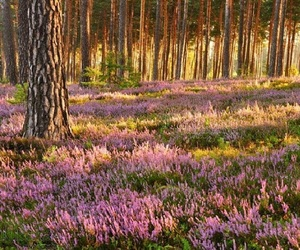 forest, Poland, and September image