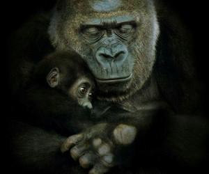 animal and gorilla image