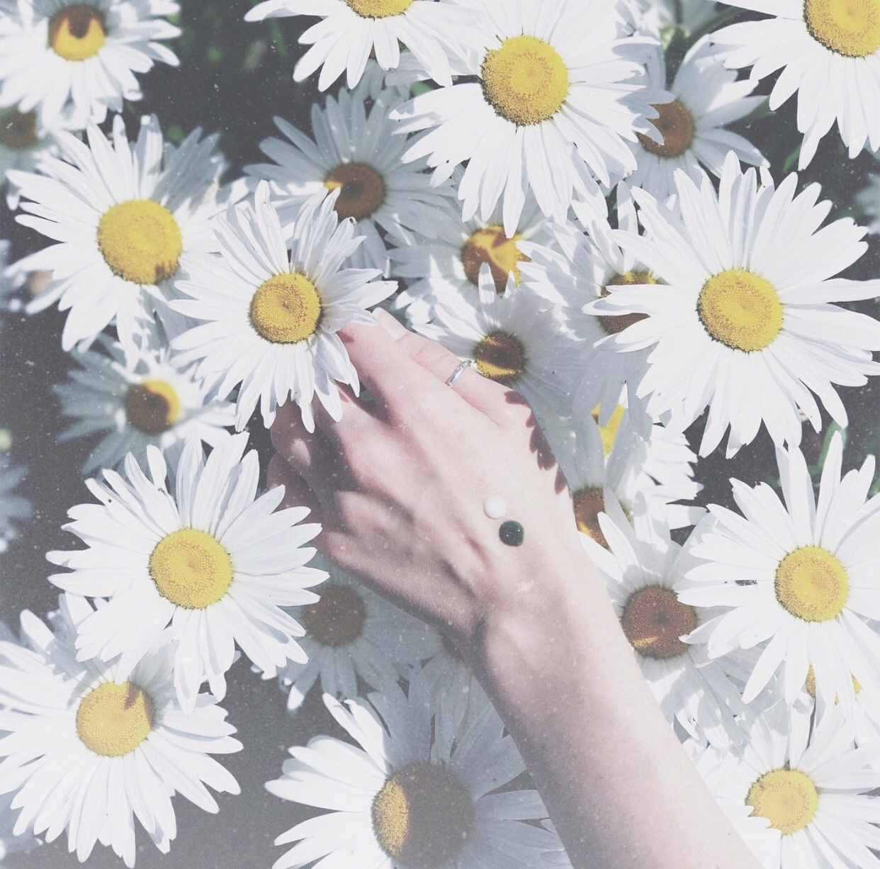 aesthetic, daisies, and beauty image